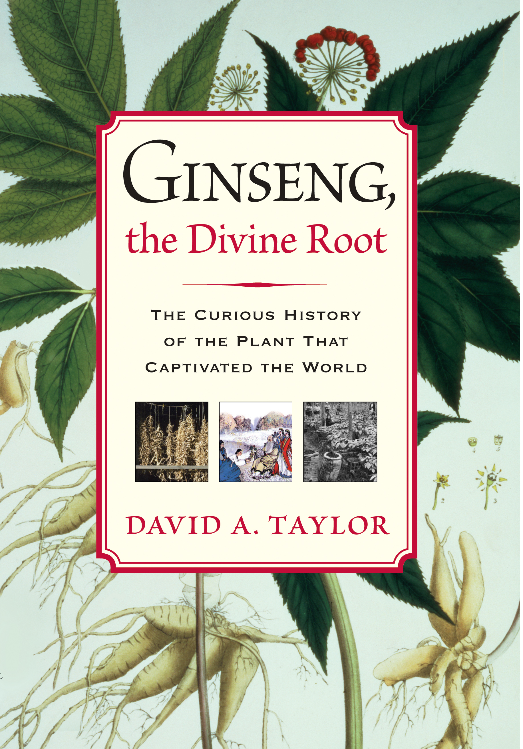 Ginseng the Divine Root by David A. Taylor